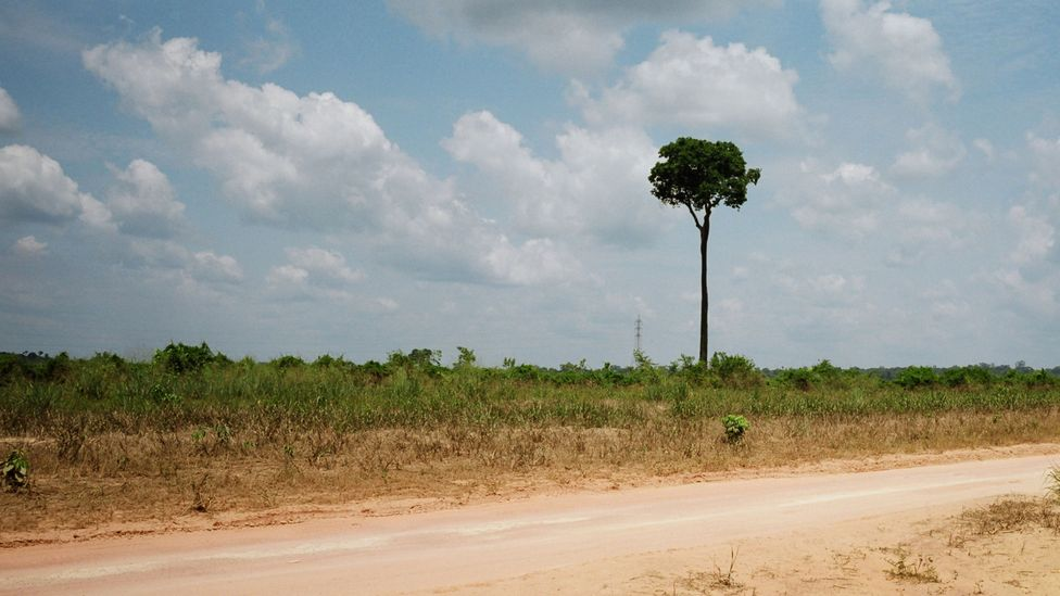 Deforestation in the Amazon fuels the climate and biodiversity crises - can financial institutions help to curb it? (Credit: Getty Images)