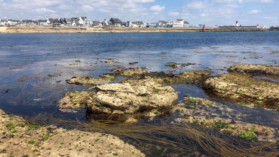 The rocky headlands around Brittany's coast make this the perfect location for algaculture (Credit: Nicola Williams)