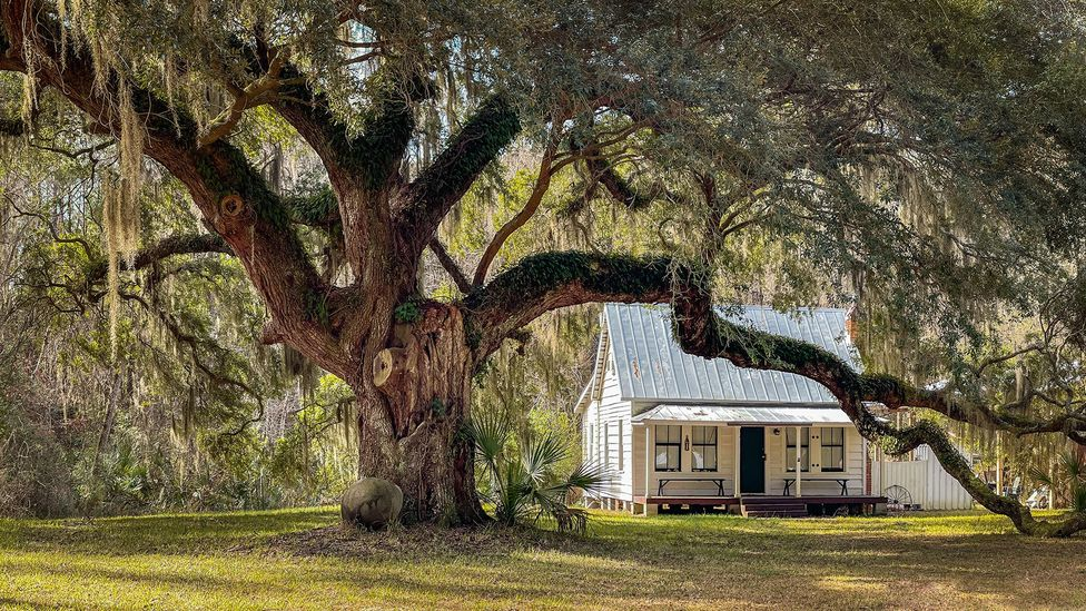 """Gullah cottages, sometimes called """"oyster houses"""", are a vital part of the heritage on Daufuskie Island (Credit: Dawna Moore Photography/Alamy)"""