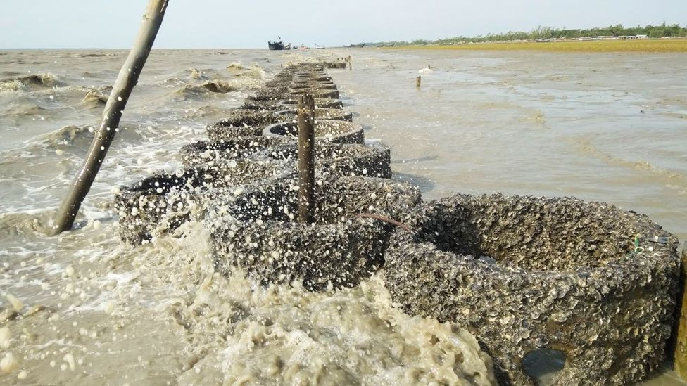 Artificially created oyster reefs have proven to be effective in reducing the size of waves coming inland (Credit: M. Shah Nawaz Chowdhury)