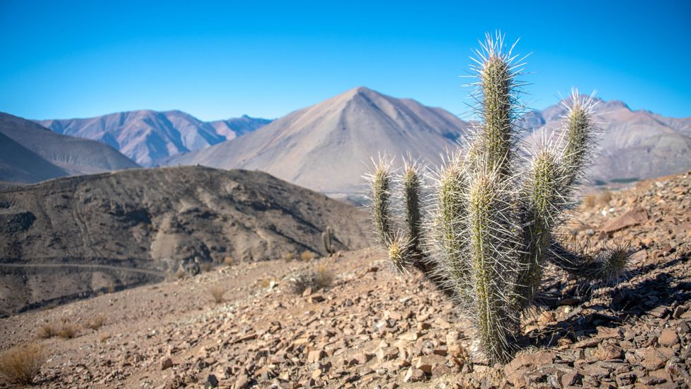 Chile's sun-baked Atacama Desert is known as the driest place on Earth (Credit: Edwin Remsberg/Getty Images)