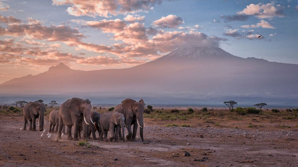 Amboseli is known for its majestic herds of elephant and views of Mount Kilimanjaro in neighbouring Tanzania (Credit: Diana Robinson Photography/Getty Images)