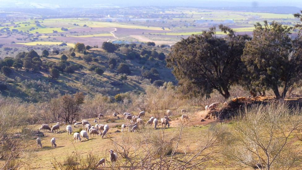 Transhumant herds pass winters in lowlands where pasture and water are plentiful (Credit: TyN)