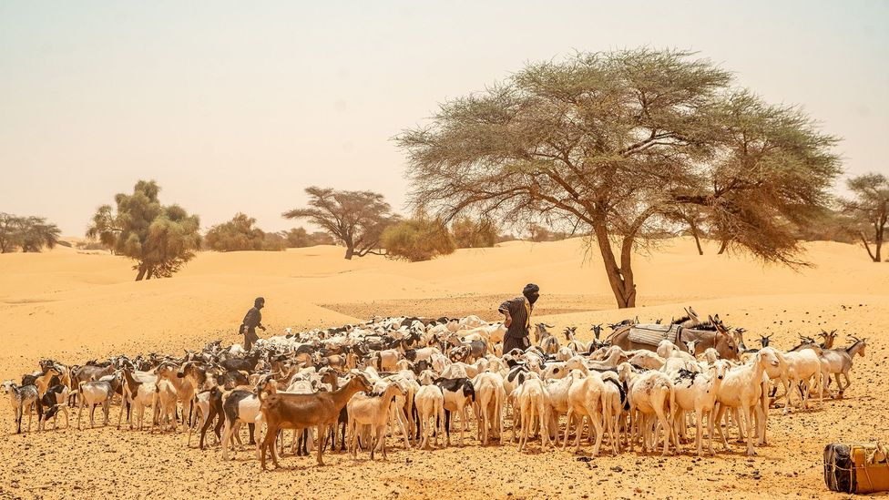 The trans-Saharan trade era brought many different ethnic groups into Mauritania  (Credit: Juan Martinez)