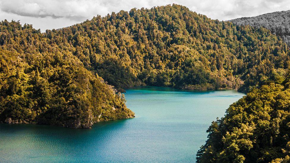 Te Urewera: New Zealand's 'living' rainforest (Credit: Maria Ehlers/Alamy)
