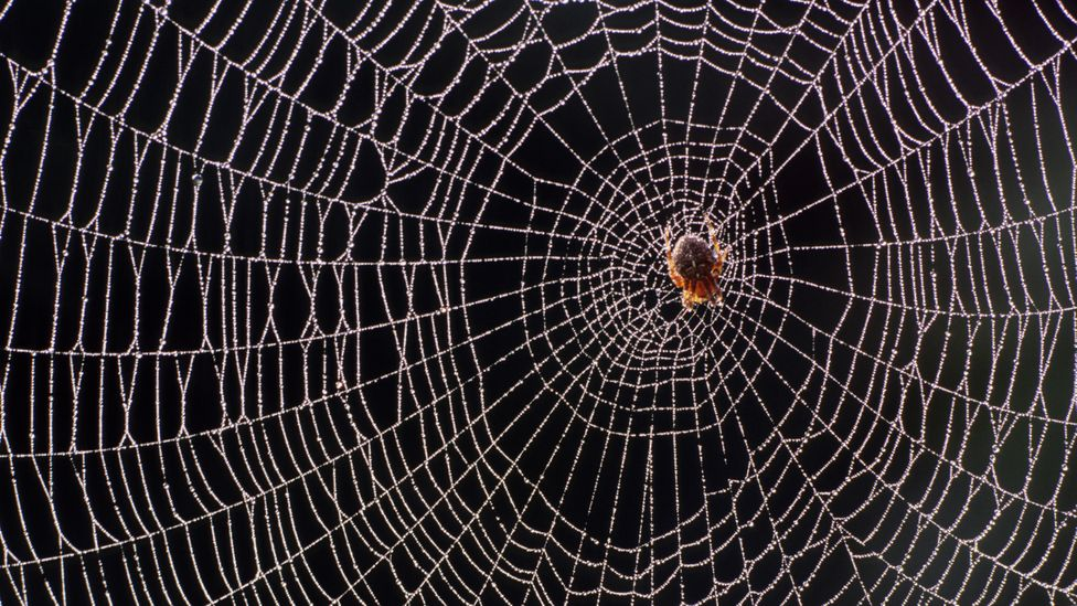 Recent research has challenged the idea that spiders are thoughtless and robotic – there's growing evidence that some can learn and solve problems flexibly (Credit: Getty Images)