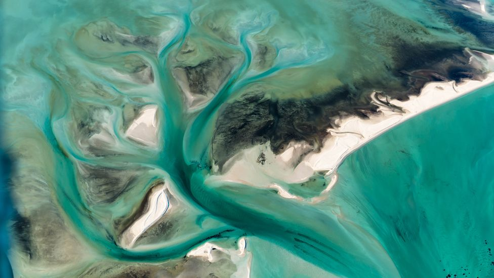 Shark Bay experienced an intense heatwave in 2011, causing waters to rise by up to 5C for two months (Credit: Getty Images)