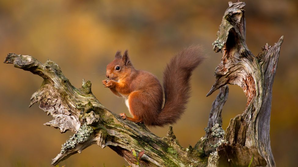 In Scotland, researchers are intricately mapping a woodland ecosystem as it regenerates – and what that translates to in monetary value (Credit: Getty Images)