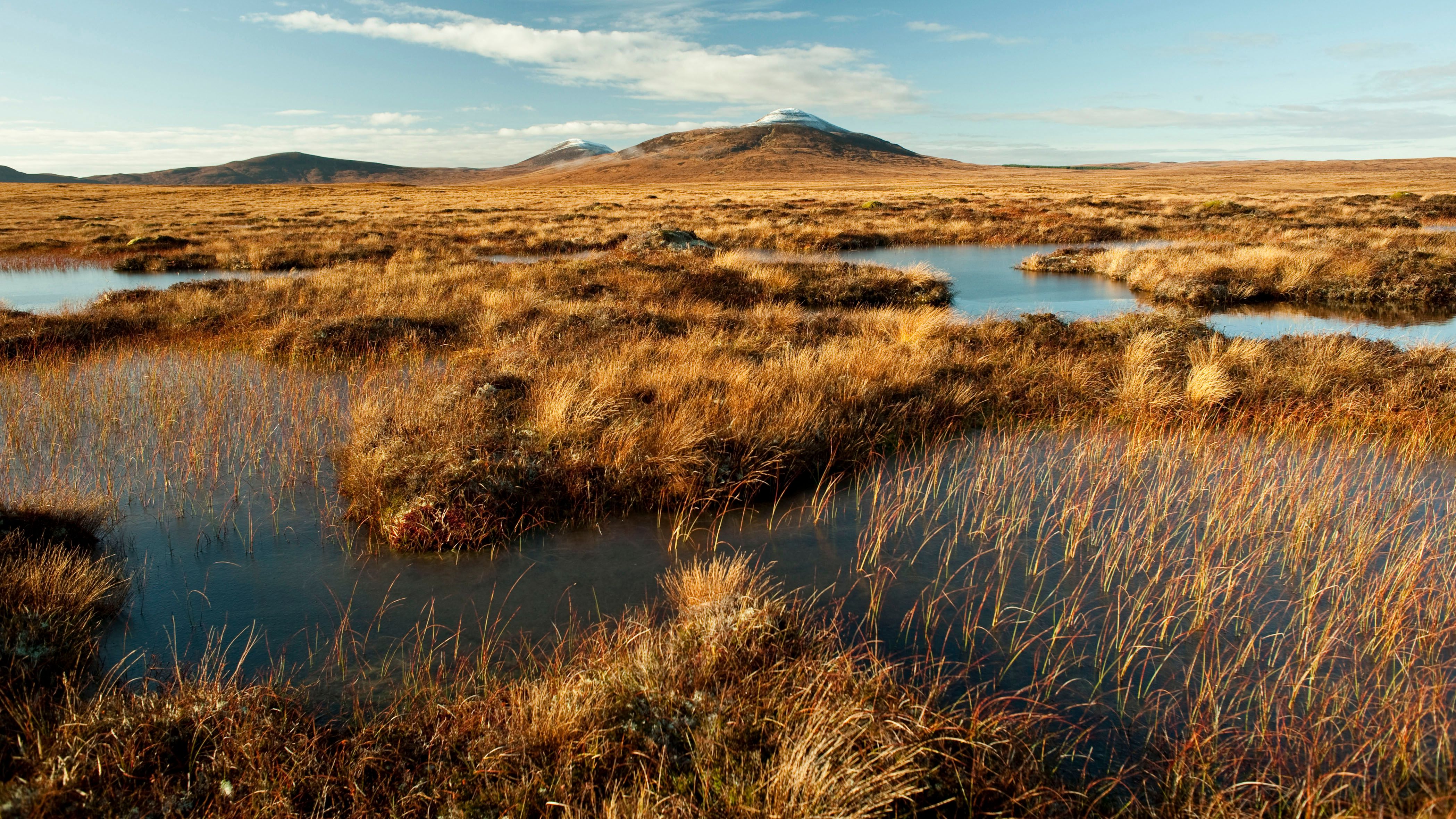 Flow Country stretches across Caithness and Sutherland in the far north of Scotland (Credit: Eleanor Bentall)