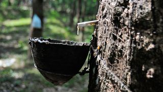 Demand for rubber is expected to soar in the coming decade, but supplies of natural rubber are at risk from disease, climate change and low prices (Credit: Wendy Johnson/Alamy)