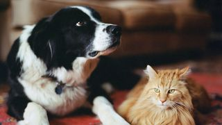 Cat and dog together (Credit: John P Kelly/Getty Images)
