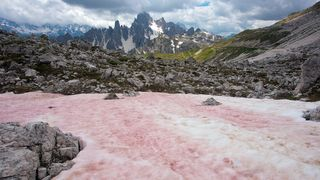 Red snow appears in the Alps during the late spring and early summer when melting frees up nutrients for algae to grow  (Credit: Bob Gibbons/Alamy)